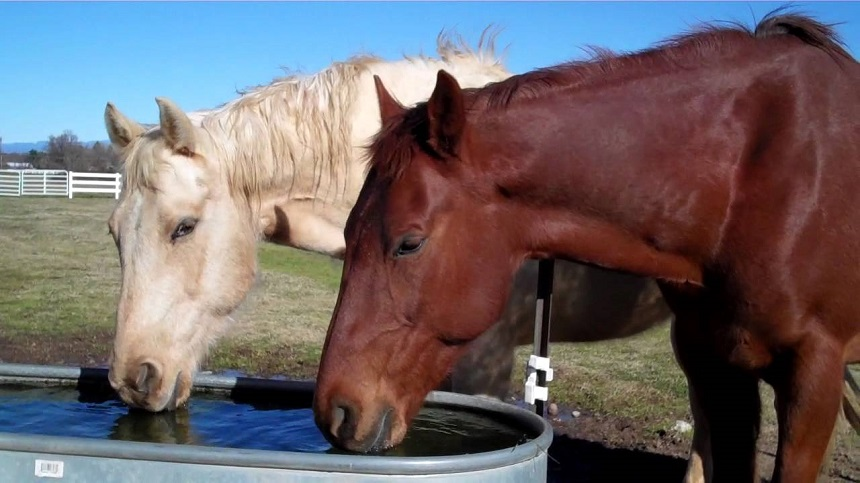 The importance of water for horses