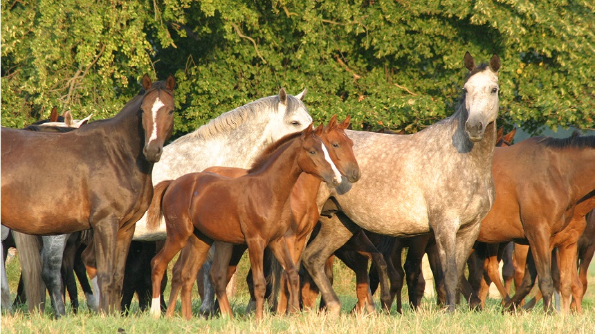 Have you thought about improving the fertility rates of your mares?