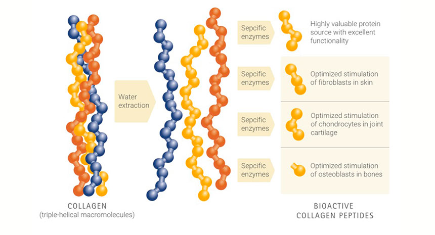 What is the origin of COLAGENO Univittá and how is it its own source in Bioactive Peptide?