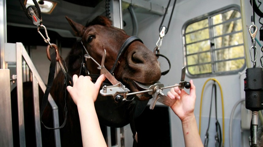 When and why should we do dental treatment in equidae?