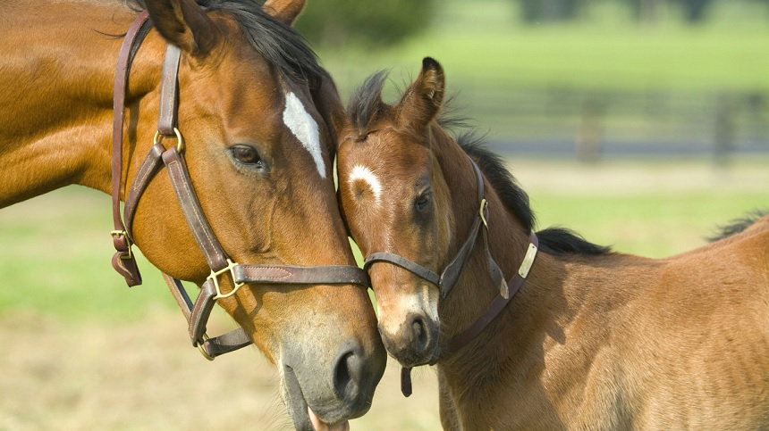 Weaning of foals