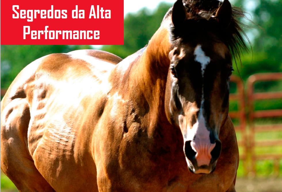 Os segredos da alta performance para cavalos